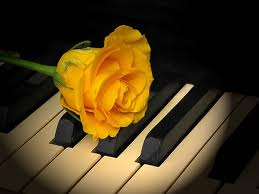 история любви желтая роза