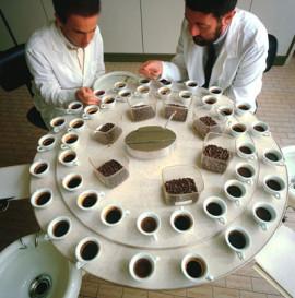 Тестирование кофе